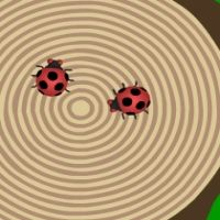 Crazy Ladybugs