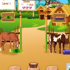 Horsecare Apperenticeship